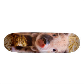 Cute Baby Piglet Farm Animals Babies Skateboard Deck