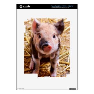 Cute Baby Piglet Farm Animals Babies Skin For iPad 3