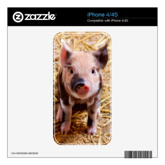 Cute Baby Piglet Farm Animals Babies Skin For iPhone 4