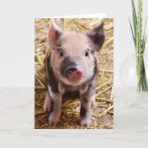 Cute Baby Piglet Farm Animals Barnyard Babies Card