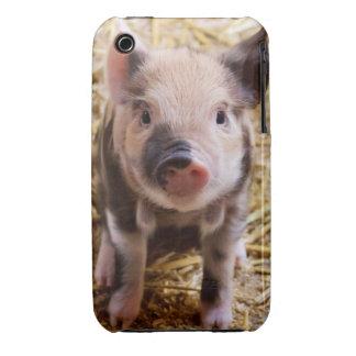 Cute Baby Piglet Farm Animals Barnyard Babies iPhone 3 Cases