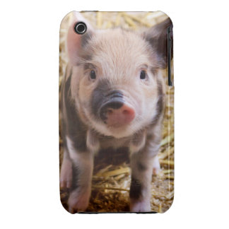 Cute Baby Piglet Farm Animals Barnyard Babies iPhone 3 Case-Mate Cases