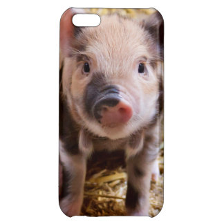 Cute Baby Piglet Farm Animals Barnyard Babies Case For iPhone 5C