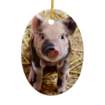 Cute Baby Piglet Farm Animals Barnyard Babies Ceramic Ornament