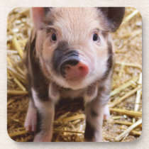 Cute Baby Piglet Farm Animals Barnyard Babies Drink Coaster