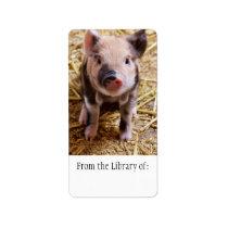 Cute Baby Piglet Farm Animals Barnyard Babies Label