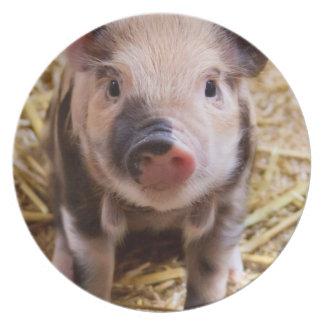 Cute Baby Piglet Farm Animals Barnyard Babies Melamine Plate