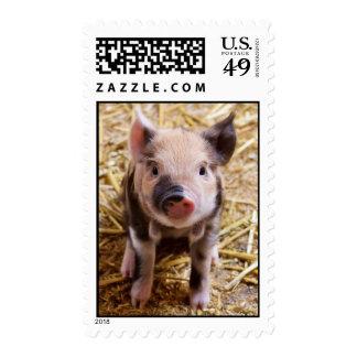 Cute Baby Piglet Farm Animals Barnyard Babies Postage Stamp