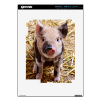 Cute Baby Piglet Farm Animals Barnyard Babies Decals For iPad 3