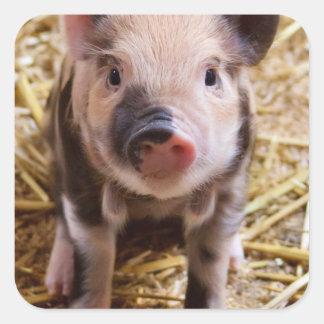 Cute Baby Piglet Farm Animals Barnyard Babies Square Sticker
