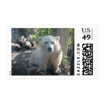 Cute Baby Polar Bear Postage