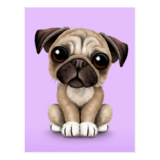 Cute Baby Pug Puppy Dog on Purple Postcard