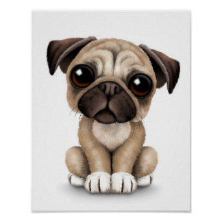 Cute Baby Pug Puppy Dog on White Poster