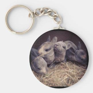 Cute baby rabbit photo design key chains
