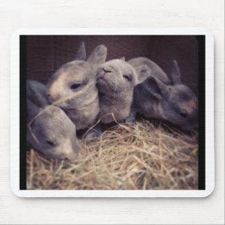 Cute baby rabbit photo design mousemat