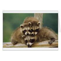 Cute Baby Raccoon