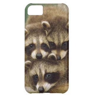 Cute Baby Raccoon iPhone 5C Case