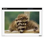 Cute Baby Raccoon Laptop Skins