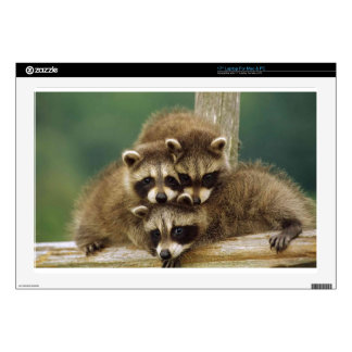 "Cute Baby Raccoon Decal For 17"" Laptop"