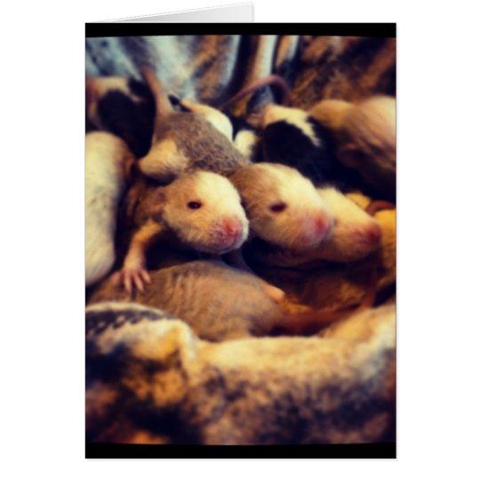 Cute baby rat photo design card