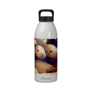Cute baby rat photo design reusable water bottles