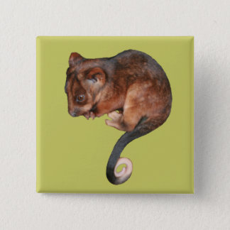 Cute Baby Ringtail Possum Pinback Button