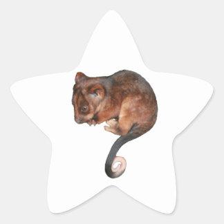 Cute Baby Ringtail Possum Star Sticker