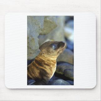 Cute baby sea lion mousepad