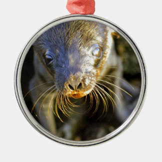 Cute baby sea lion pup Galapagos Islands Christmas Tree Ornaments