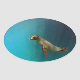 Cute baby sea lion underwater Galapagos Oval Sticker