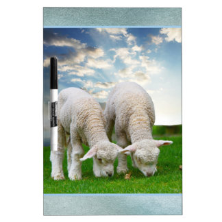 Cute Baby Sheep in a Field with Beautiful Puffy Cl Dry-Erase Board
