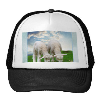 Cute Baby Sheep in a Field with Beautiful Puffy Cl Trucker Hat