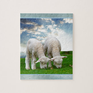 Cute Baby Sheep in a Field with Beautiful Puffy Cl Puzzles