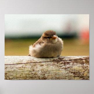 Cute Baby Sparrow Bird Photo Poster