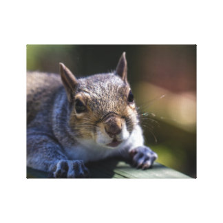Cute Baby Squirrel Nature Photography Canvas Print