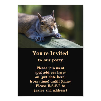 Cute Baby Squirrel Nature Photography Card