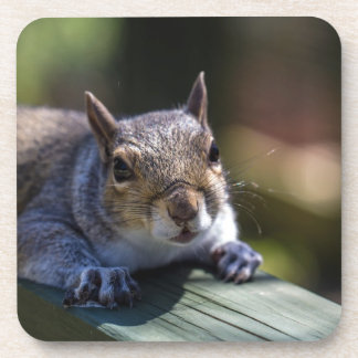 Cute Baby Squirrel Nature Photography Drink Coasters