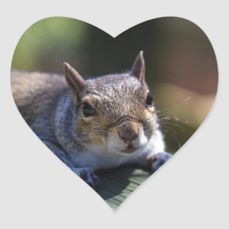 Cute Baby Squirrel Nature Photography Heart Sticker