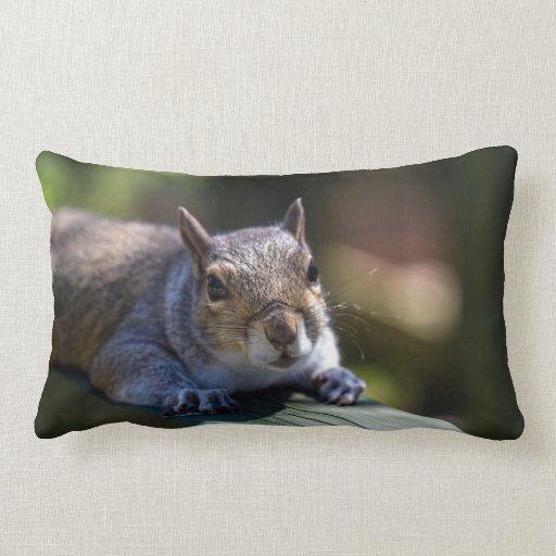 Cute Baby Squirrel Nature Photography Lumbar Pillow Zazzle