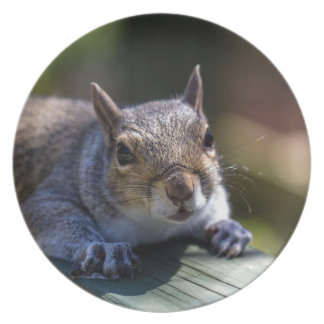 Cute Baby Squirrel Nature Photography Plate