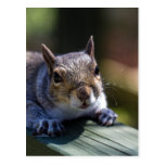 Cute Baby Squirrel Nature Photography Post Cards