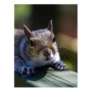 Cute Baby Squirrel Nature Photography Postcard