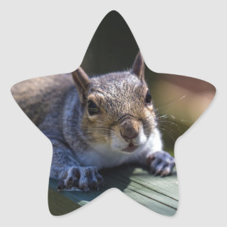 Cute Baby Squirrel Nature Photography Star Sticker