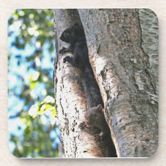 Cute Baby Squirrels Coasters