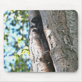 Cute Baby Squirrels Mouse Pad