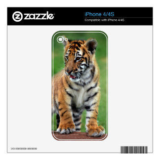 Cute baby Tiger cub Decals For iPhone 4