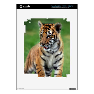 Cute baby Tiger cub iPad 3 Skin