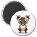 Cute Baby Tiger Cub with Blue Eyes on White Refrigerator Magnet