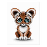 Cute Baby Tiger Cub with Blue Eyes on White Postcard