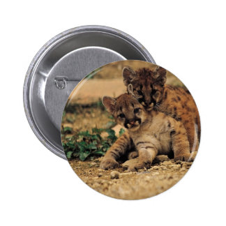 Cute Baby Tigers 2 Inch Round Button